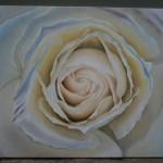 Біла троянда. Белая роза.